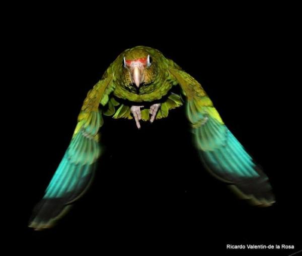 flying-birds-tattoo